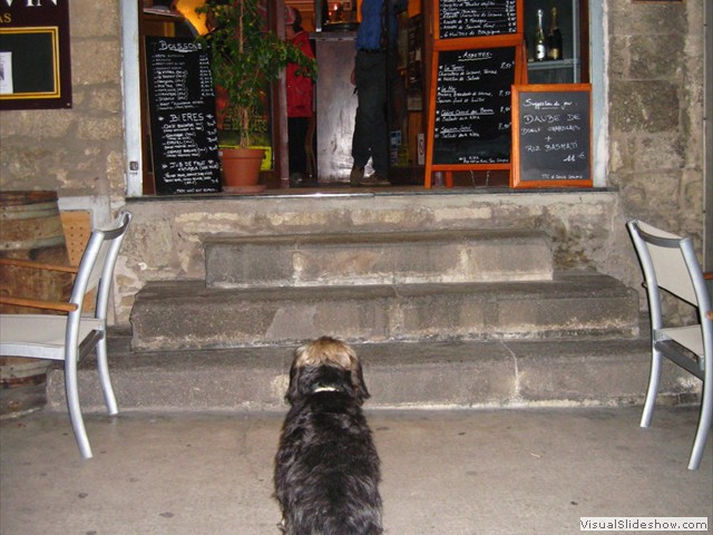 Our dog Max is a regular visitor to the local bars and restaurants